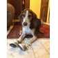 Socks & Boots for Dogs Green Spring/Fall XS / S / M / L / XL Terylene