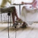 رخيصةأون الستائر-فيلم نافذة وملصقات زخرفة بسيط ورد PVC ملصق النافذة