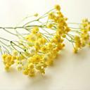 رخيصةأون أزهار اصطناعية-زهور اصطناعية ثلاثة عوارض / زهور مليئة بالنجوم / زهور كلاسيكية حديثة لسطح المكتب