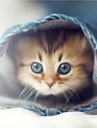 Oblečky a vybavení pro kočky