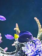 Tillbehör till fiskar och akvarium