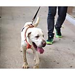 Недорогие -Собаки Ремни Регулируется / Выдвижной Отражение Дышащий Складной Однотонный Нейлон Оранжевый Зеленый
