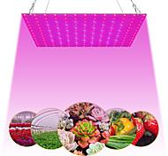 abordables -1 pc 81leds 169 leds intérieur LED élèvent des plantes légères lampe de croissance rouge bleu spectre complet pour plante hydroponique intérieure