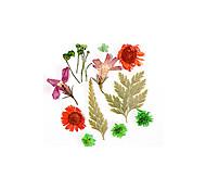 abordables -non. 11 vraie fleur fleur séchée matériel tournesol fleur immortelle petite marguerite bleue enchanteresse époxy vraie fleur séchée bricolage nail art
