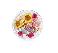 abordables -24 pcs vraie fleur fleur séchée matériel tournesol fleur immortelle petite marguerite bleue enchanteresse époxy vraie fleur séchée bricolage nail art