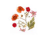 abordables -24pcs vraie fleur fleur séchée matériel tournesol fleur immortelle petite marguerite bleue enchanteresse époxy vraie fleur séchée bricolage nail art