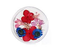abordables -non. 10 vraie fleur fleur séchée matériel tournesol fleur immortelle petite marguerite bleue enchanteresse époxy vraie fleur séchée bricolage nail art