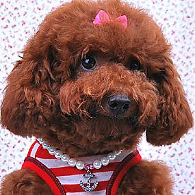 Недорогие Бижутерия и аксессуары для собак-Ожерелья для Собаки Белый Весна/осень S Пластик