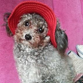 Недорогие Бижутерия и аксессуары для собак-Кошка Собака Толстовки Платки и шапочки Однотонный Праздник Одежда для собак Черный Лиловый Красный Костюм Нейлон S M