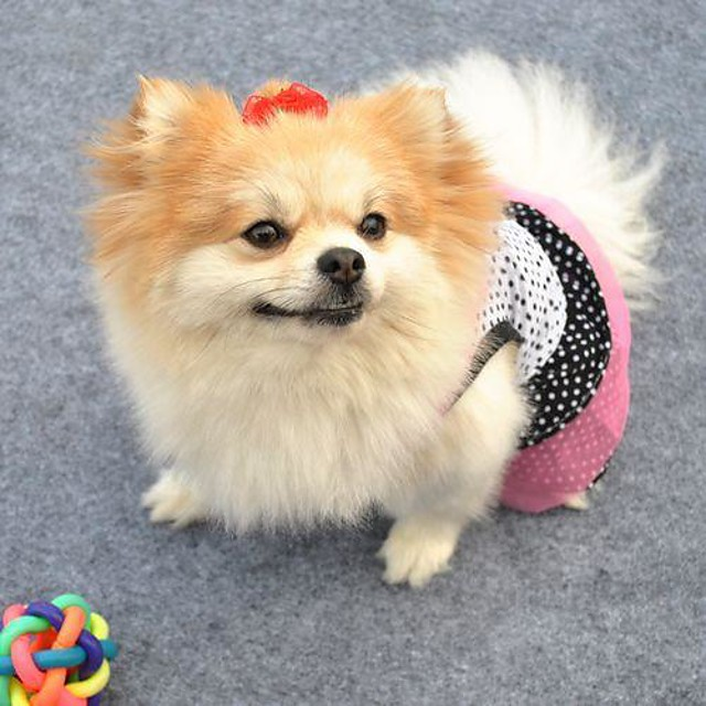 Pisici Câine Rochii Îmbrăcăminte Câini Negru Alb Costume Bebeluș Caine mic Bumbac Buline Cosplay Nuntă XS S M L
