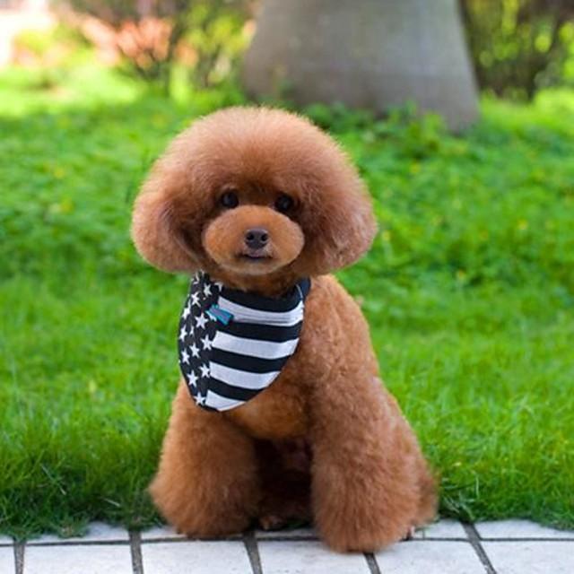Câine Gulere Ajustabile / Retractabil Nailon Negru / Alb