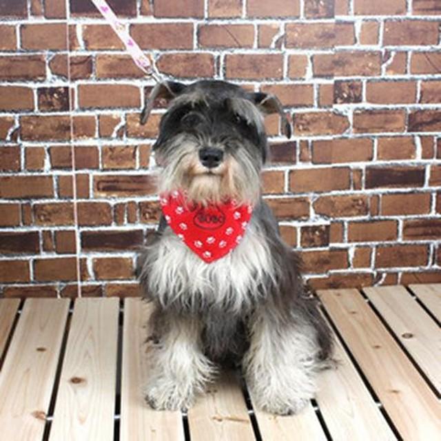 Câine Gulere Ajustabile / Retractabil Nailon