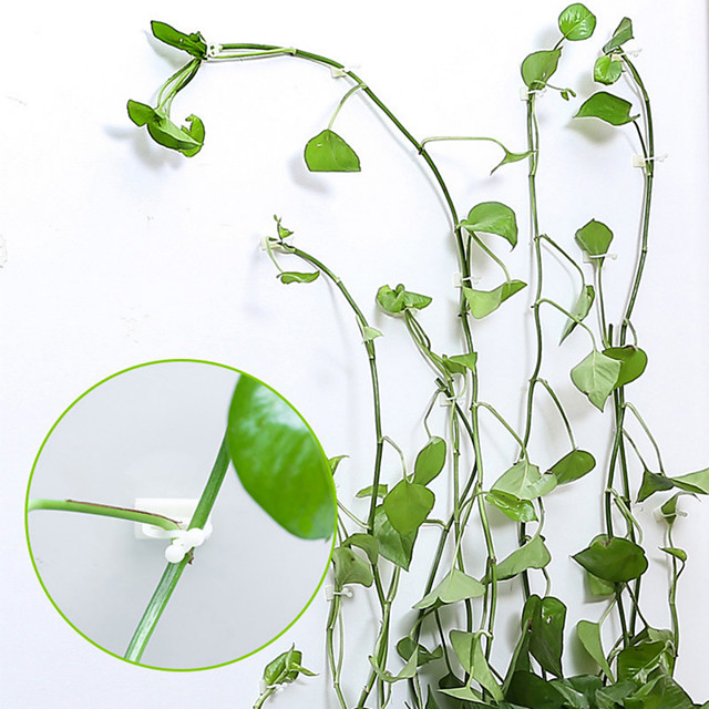 20pcs Invisible Wall Rattan Clamp Clip Invisible Wall Vine Climbing Sticky Hook Rattan Fixed Clip Bracket Plant Stent Supports
