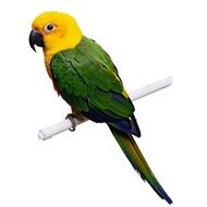 Accessoires für Vögel