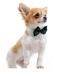 Hund Smycken & Accessoarer