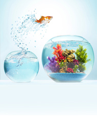 Zubehör für Aquarien