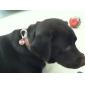 Koirat ID-laput Merkit Turvallisuus Bone Punainen Vihreä Sininen Keltainen Violetti Ruusunpunainen Stainless Steel
