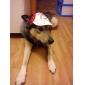 bouchon sport pour les chiens (XS-XL, coloris assortis)
