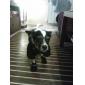 강아지 레인 코트 강아지 의류 방수 솔리드 블랙 레드 코스츔 애완 동물