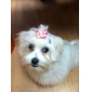 Hair Accessories for Dogs / Cats Pink Spring/Fall Terylene