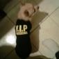Dog Shirt / T-Shirt Dog Clothes Breathable Letter & Number Black Costume For Pets
