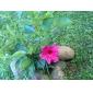 아이 패드 2/3/4를위한 대를 가진 Lichi는 곡물 자동 절전 및 깨우기 pu 가죽 상자