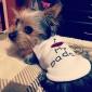 Dog Shirt / T-Shirt Dog Clothes Letter & Number Costume For Pets