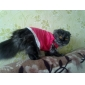 Dog Shirt / T-Shirt Dog Clothes Breathable Animal Hearts Red Costume For Pets