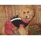 style de carrosserie rayée chaud pour les chiens (XS-XL, coloris assortis)