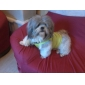 Perros Camiseta Verde Ropa para Perro Verano Letra y Número