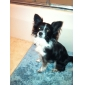 Собака Платья Одежда для собак Дышащий Спорт Буквы и цифры Красный Костюм Для домашних животных