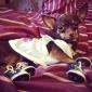Câine Pantofi & Cizme Cowboy Modă Sport Solid Blugi Albastru Roz Pentru animale de companie
