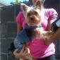 Dog Pants Dog Clothes Cowboy Fashion Jeans Blue