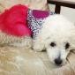 Собака Платья Одежда для собак Мода Сердца Розовый Костюм Для домашних животных