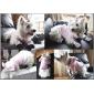 개 후드 핑크 강아지 의류 겨울 동물