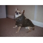 Elegant European Style Pet Coat with Fur Collar and Waistband for Dogs