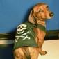 Dog Shirt / T-Shirt Black Dog Clothes Summer Spring/Fall Skulls Cute Halloween