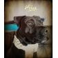 réglable en cuir de style collier de chien rivet (couleurs assorties)