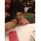 Собака Футболка Одежда для собак Буквы и цифры Костюм Для домашних животных