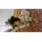 Cat Dog Dress Dog Clothes Fashion White Costume For Pets