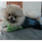 Cachorro Calças Roupas para Cães Vaqueiro Fashion Jeans Azul Ocasiões Especiais Para animais de estimação