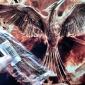 женская тканые птица браслет ручной работы