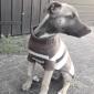 Кошка Собака Свитера Одежда для собак Сохраняет тепло Мода В полоску Костюм Для домашних животных