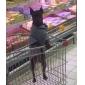 Cachorro Camisola com Capuz Roupas para Cães Casual Esportes Carta e Número Cinzento Ocasiões Especiais Para animais de estimação