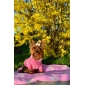 Pink Heart Comfort Hoodie for Dogs (XS-L)
