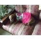 강아지 드레스 강아지 의류 패션 하트 핑크 코스츔 애완 동물