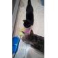Chat Jouet pour Chat Jouets pour Animaux Jouets d'activité Jouet à Plumes Bonbon Pour les animaux domestiques