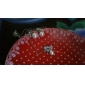 Жен. Серьги-гвоздики Базовый дизайн Мода Симпатичные Стиль бижутерия Жемчуг Сплав В форме животных Бабочка Бижутерия Назначение Для