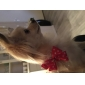 Cat / Dog Bandanas & Hats Red Dog Clothes Summer / Spring/Fall Bowknot Cute