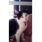고양이 / 개 태그 태극권 화이트 / 화이트와 블랙 금속